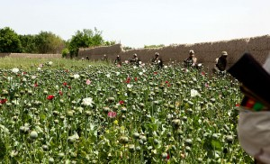 Poppy fields in Helmand Province Afghanistan by Cpl Marco Mancha