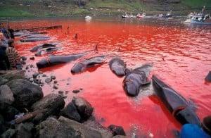 Faroe Islands 04 (c) EIA