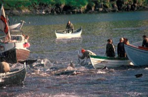 Faroe Islands Pilot Whale Hunt (c) EIA