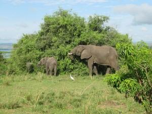 Elephants by Daryona