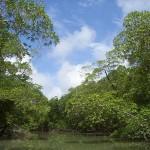 Amazon Rainforest - By Cesar Paes Barreto