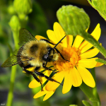 Bee at work - by Bob Peterson