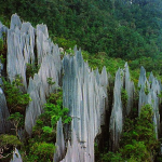 Pinnacles at Mulu Borneo by Paul White