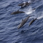 Dolphins by GINGO