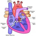 Heart by Wabcaplet