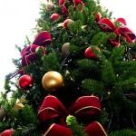 Christmas Tree by Lotus Head