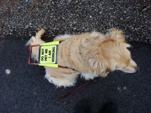 Guide Dog (PD)