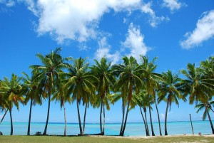 Palm Trees by Robert Young