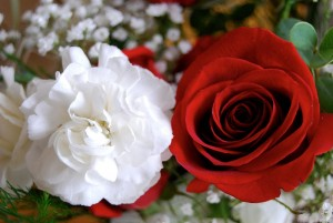 Red and White Roses by Janine from Mililani Hawaii United States