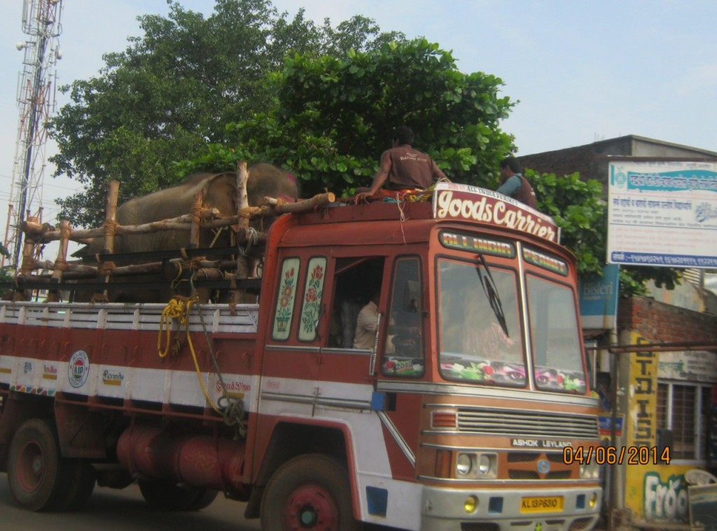 Sunder Being Transported to Safety