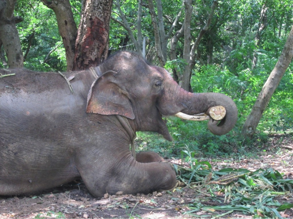 Sunder Happy at last