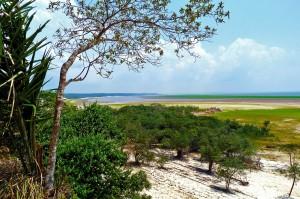 Amazon rainforest (PD)