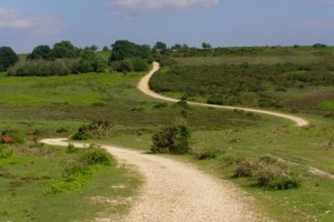 New Forest by Jim Champion geograph.org.uk (CC BY-SA 2.0)