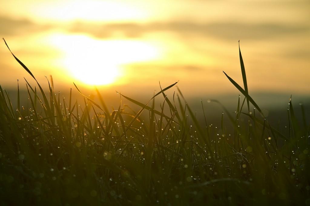 Grass in sunlight (PD)