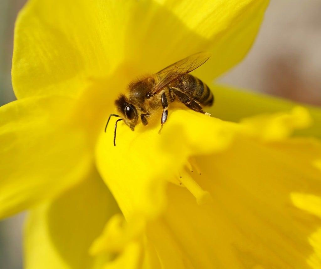 Bee 3 (PD)