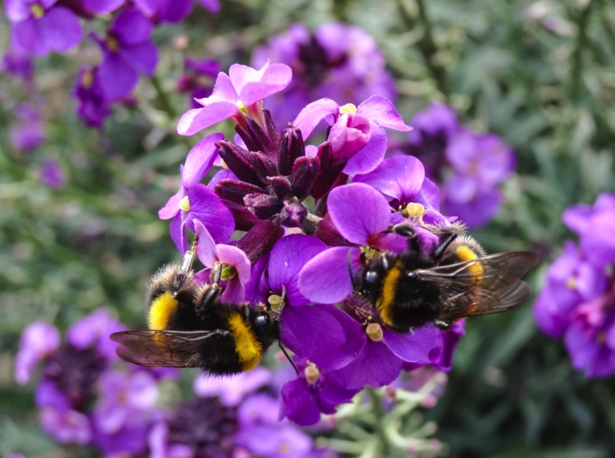 Great British Bee Count By Carl De Groot