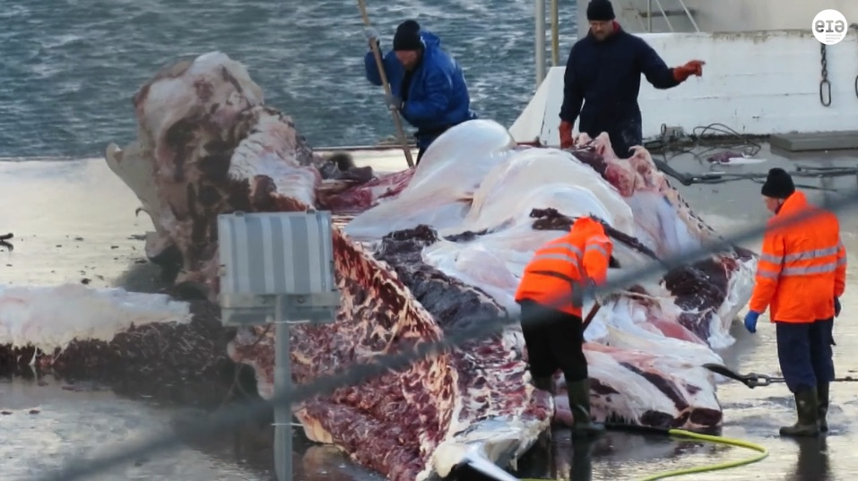 EIA whale slaughter