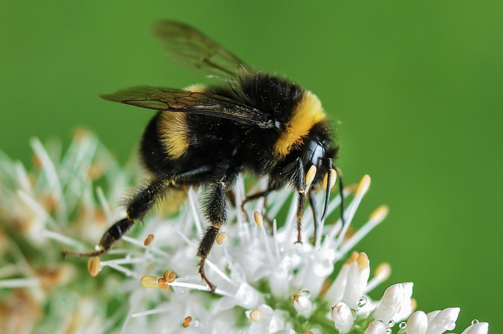 Bee 2 (PD)