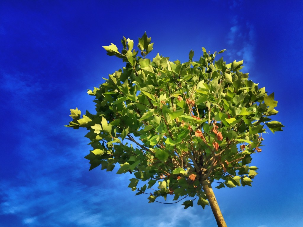 Tree (PD)