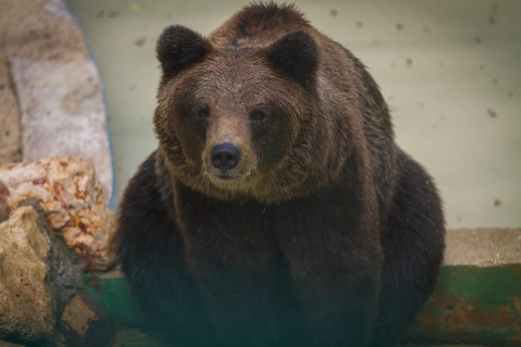 Bear (PD)