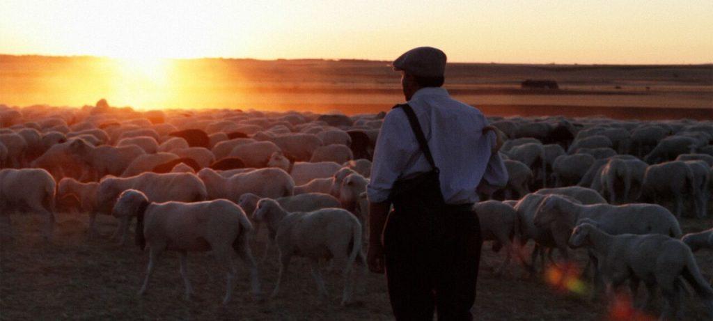 The Shepherd 2