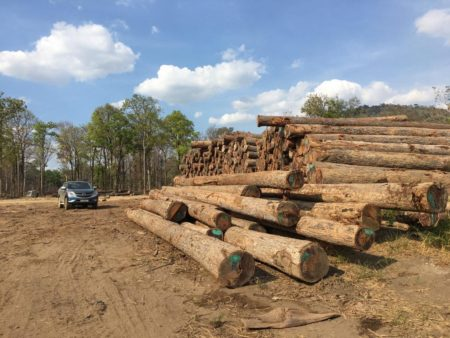 Keruing logs at Khla Thom depot, Vietnam, March 2017 (c) EIA